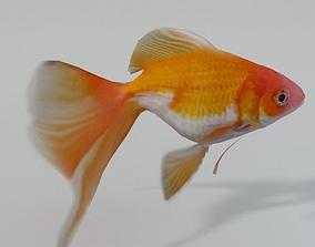 3D model Goldfish