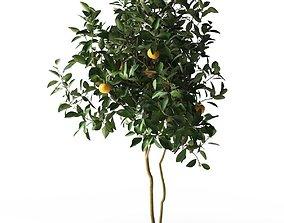 Citrus Tree in Pot 3 3D