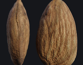 Almond Seed A 3D model