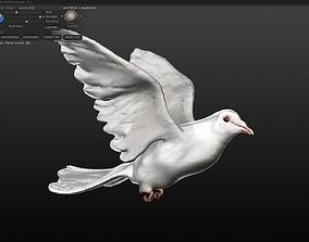 3D model white dove
