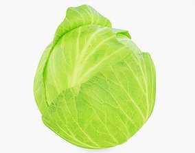 Cabbage Vegetable 3D model