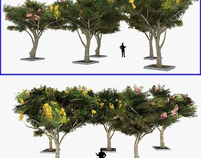 3D asset Acacia Tortillis Flower Tree Low Poly