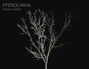8 Tree Pterocarya 2 season 3D model