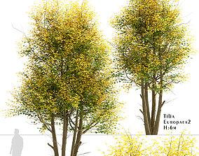 Set of Tilia Europaea or Common Lime Trees - 2 Trees 3D