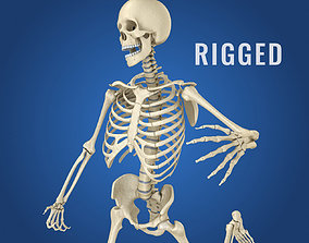rigged Human Skeleton 3D model