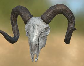 3D model animel Goat Skull