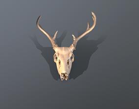 3D asset low-poly Deer skull