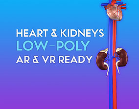 realtime 3D Heart and Kidneys