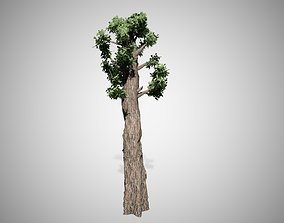 3D model Giant Redwood