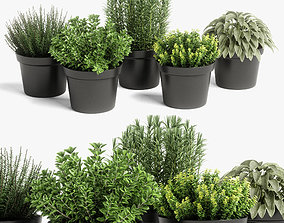 herb 3D model plants set 05