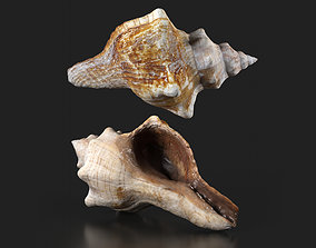 West Indian chank shell 3D
