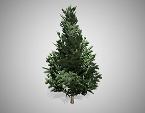 3D asset Scots Pine Tree