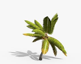 3D asset Coconut Palm Tree 14857
