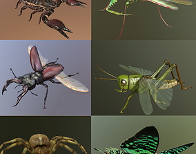 3D Insect Collection 1