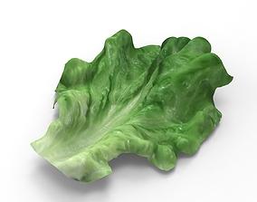 Lettuce - leaf 3D model
