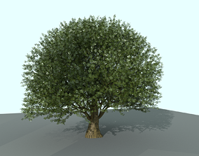 OAK TREE 3D model PBR