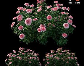 3D model Rose plant set 25