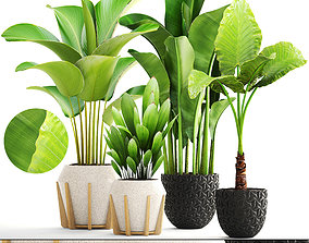 botanical Collection of plants 3D