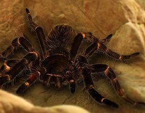 3D asset Goliath Bird Eating Spider - Owen Moloney