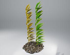 3D model Kelp V1