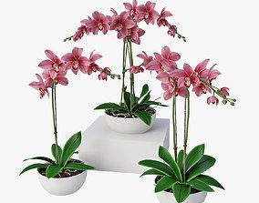 3D Orchids set