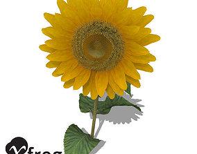 XfrogPlants Sunflower 3D model