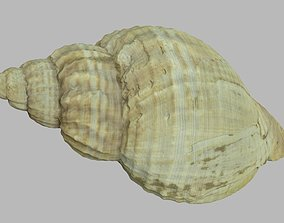Single seashell photoscan 09 3D