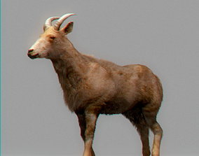 Goat brown 3D