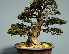 Bonsai Tree 3D asset realtime ceramic