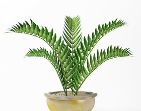 Green Fern Plant In White And Gold Vase 3D