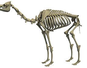 Full Body Camel Skeleton 3D