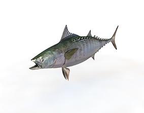 False Albacore Tuna 3D asset