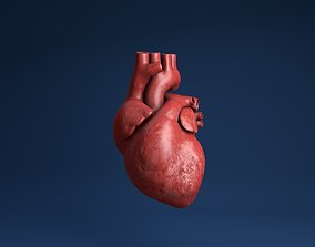 animated Human organs medical profiles of the heart 3D 1