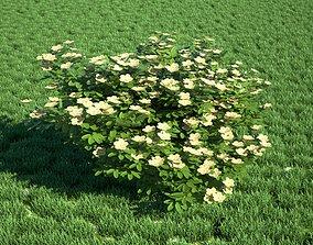 3D Realistic Bush
