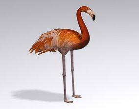 flamingo zoo 3D