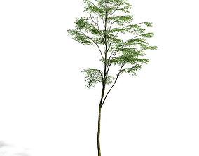 3D Forest 28 am154
