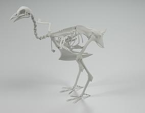 3D model Chicken Skeleton