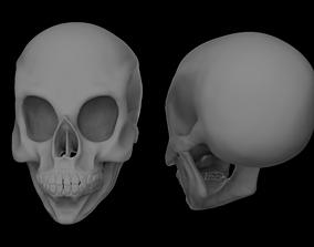 bone 3D asset low-poly skull