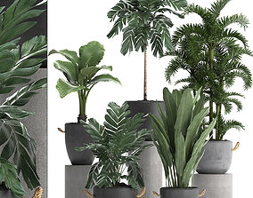 Collection Exotic plants 405 3D model