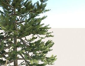3D model realtime PBR Pine Tree