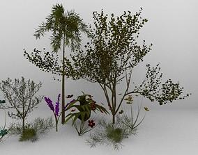 3D tropical plants