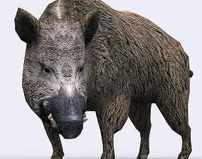3DRT - Boar animated