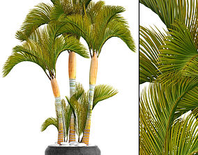 3D model Collection of tropical plants 2