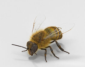 3D model Honey Bee High Detailed