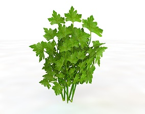 3D onion Parsley