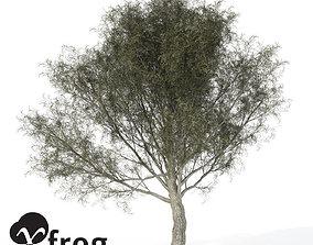 3D XfrogPlants Crack Willow