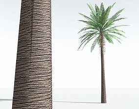3D asset EVERYPlant Date Palm LowPoly 06 --10 Models--