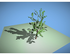 leaf tree 3D asset