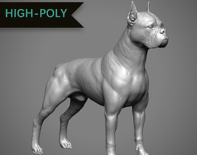 3D print model Boxer High-Poly