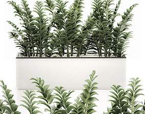 3D model Zamioculcas in pots for the interior 534